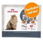 Royal Canin Hairball Care и Intense Beauty смешанная упаковка 4 x 85 г
