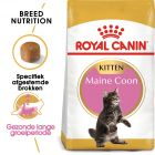 Royal Canin Kattenvoer - Maine Coon Kitten