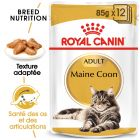 Royal Canin Maine Coon Adult en sauce pour chat