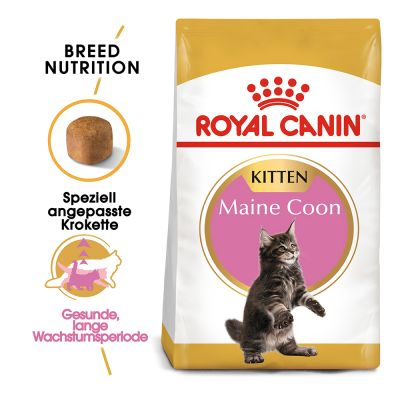 royal canin maine coon kitten zu top preisen bitiba
