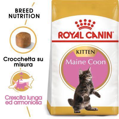 Royal Canin Maine Coon Kitten Zooplus
