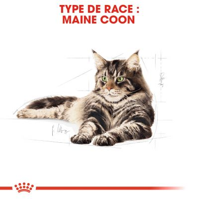 ... Royal Canin Maine Coon pour chat
