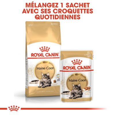 ... Royal Canin Maine Coon pour chat ...