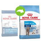 Royal Canin Maxi Puppy / Junior Active суха храна