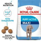 Royal Canin Maxi Puppy / Junior Active pour chiot