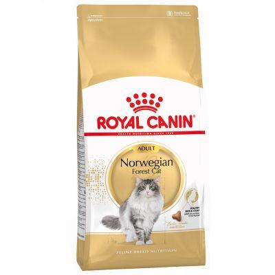 5ce4ef3dd7c7 Royal Canin Norwegian Forest Cat Adult οικονομικά στην zooplus