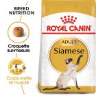 Royal Canin Siamese Adult pour chat