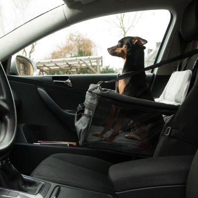 sedile per auto booster per cani zooplus