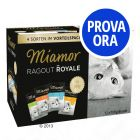 Set prova Miamor Ragù Royal 12 x 100 g