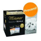 Set prova misto Miamor Ragù  Royal Kitten 12 x 100 g