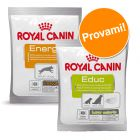 Set prova misto! Snack Royal Canin 10 x 50 g