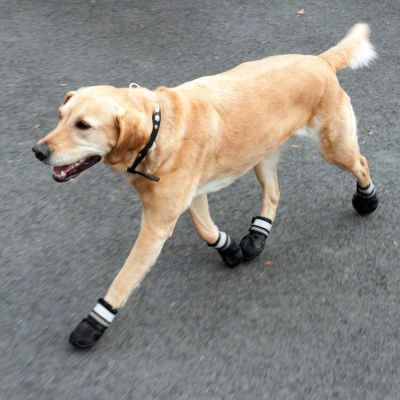 Sports   Protective Dog Boots - Dog Boots that Stay on at zooplus! 60a9827ce