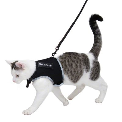 Trixie XCat XL Harness with Lead and Exclusive Stickers