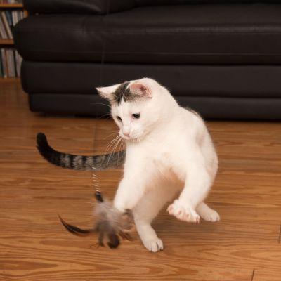 Veľká mačička pozeraním
