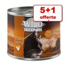 Wild Freedom Adult 5 x 200 g + 1 boîte pour chat