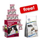 16 x 370g Bozita Chunks in Jelly + 400g Bozita Grain-Free Dry Food Free!*
