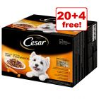 24 x 100g Cesar Pouches Deliciously Fresh Favourites In Sauce - 20 + 4 Free!*