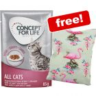 48 x 85g Concept for Life Wet Cat Food + Aumüller Shanghai Flamingo Cushion with Catnip Free